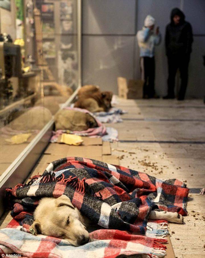 perros-se-refugian-del-frio